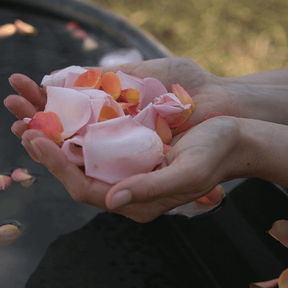 Harvest-Now